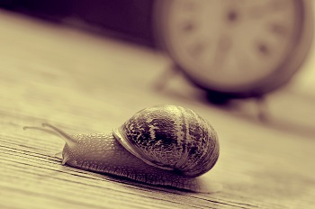 Snail-goes-slow